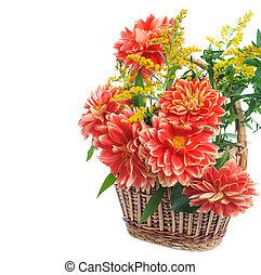 georgina, fleurs