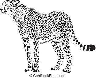 gepard, 白, -, チーター, 黒