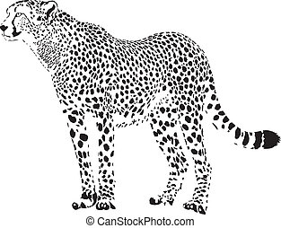 Gepard - Black and white cheetah - black and white vector...