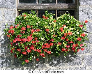 geranio, fiori
