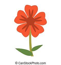 geranium flower natural image
