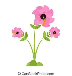 geranium flower season spring