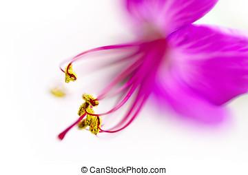 Geranium flower super macro ,  shallow depth of field