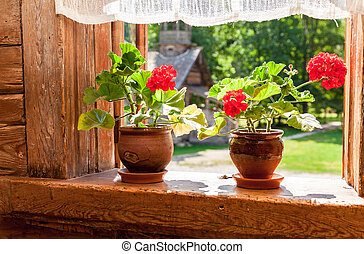 Geranium flowers on the window of old rural wooden house in sunny day