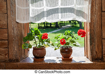 Geranium flowers on the window of rural wooden house on a sunny