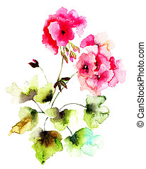 Geranium flowers, watercolor illustration