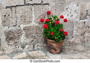 geranium on the stone wall background