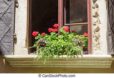 Geranium on window sill of a ancient house - Geranium in...
