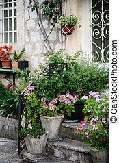 Geranium pelargonium in large architectural flowerpots with other green plants near the house with windows with metal bars.