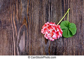Geranium pink with leaf on board
