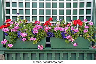 Colorful geranium flower planters on green shelf