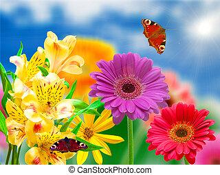 gerber, bloemen