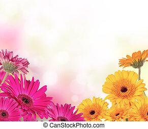 gerber, blomster, hos, fri, arealet, by, tekst