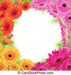 Gerber blossoms frame