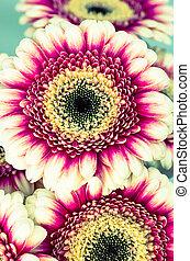 gerber, fiori