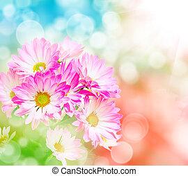 Gerber flower close up - Close up of gerber flower
