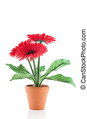 Gerber flowers in pot - Gerber flower plant in pot isolated...