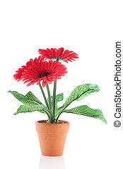 Gerber flowers in pot - Gerber flower plant in pot isolated...