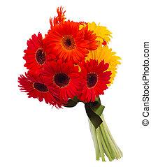 gerbera, 花, 花束