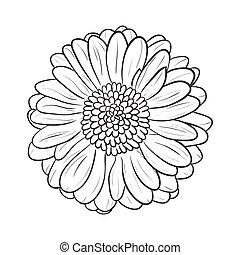 Gerbera chamomile icon. Vector line style - Chamomile...
