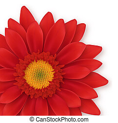 Gerbera Close-up - Close-up of gerbera. Digital...