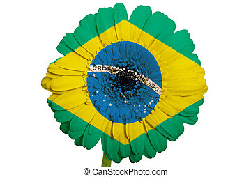 gerbera daisy flower in colors national flag of brazil on white background as concept and symbol of love, beauty, innocence, and positive emotions