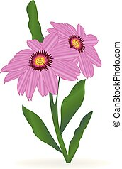 Gerbera daisy flower vector
