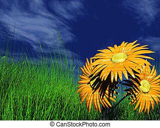 Gerbera daisy in a meadow