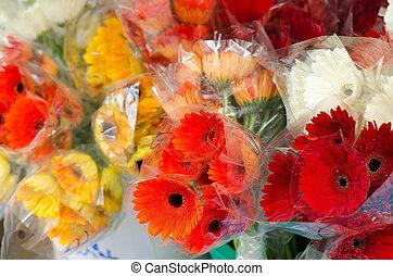 gerbera, en venta, en, mercado de flor, en, bangkok, tailandia