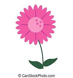gerbera flower natural image