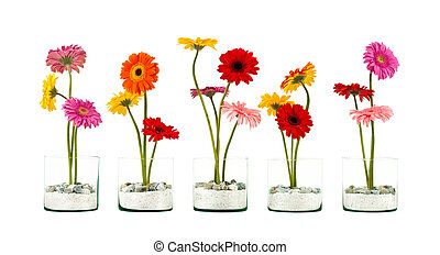 Five Gerbera flowers in a crystal flower pot in row isolated