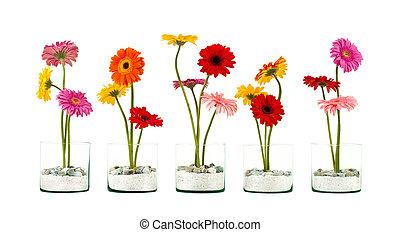 Gerbera flower row - Five Gerbera flowers in a crystal ...