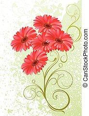 gerbera, fondo, floreale