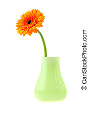 Gerbera in vase isolated on white