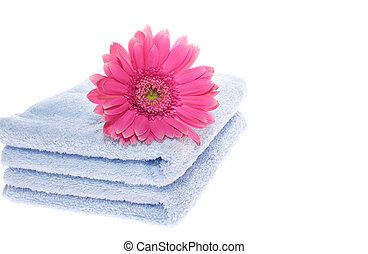 Gerbera on Blue Towel - gerbera on blue towel on white...