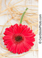 gerbera on the white wooden background