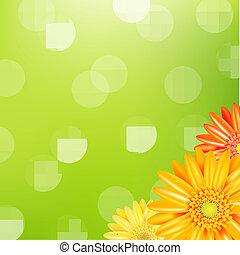 gerbers, groene achtergrond, gele, natuur