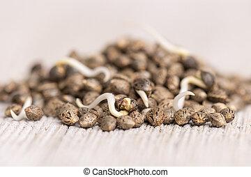 gereed, cannabis, hennep, zaden, germination