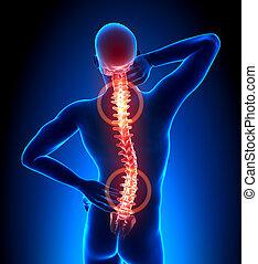 gerinc, trauma, -, hátgerinc, fáj