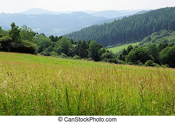 German Eifel Mountains in the summer