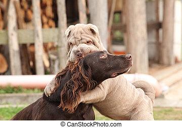 German Quail Dog with Sharpei