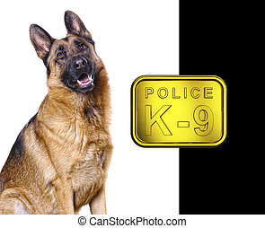 german shepard isolated on white with k9 golden plate