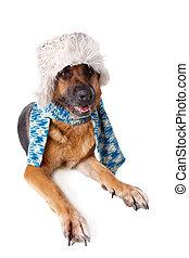 German shephard dog wearing hat and scarf