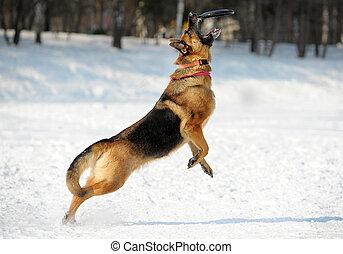 german shepherd catching disk