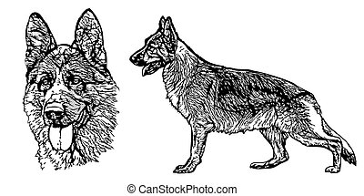 German shepherd illustration on white