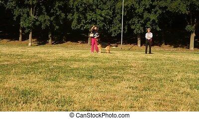 german shepherd in the park