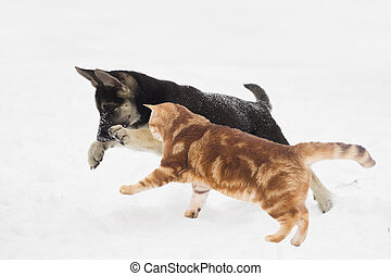 German Shepherd puppy and cat jumping