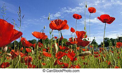 german springtime with red blossom