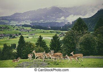 Germany Bavaria, Alps, Obermaiselstein