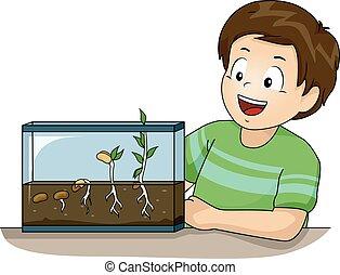 germinación, experimento, niño